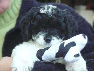 A Black & White Parti-coloured
