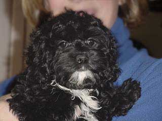 A Black-coloured