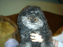 """Remmy""... a