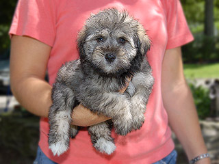 A Silver & Gold-coloured