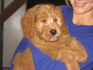A Buff~Apricot-coloured