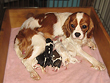 """Morgan"", a