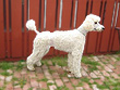 Hudson... a White-coloured