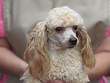 """Blake"", an
