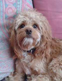 Ms. Gretchen Weissend, an