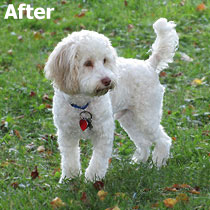 Yogi A. . . .