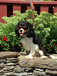 Willy Wonka... a